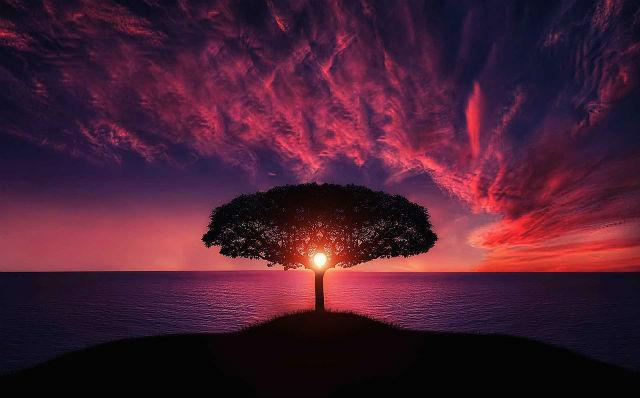 神々しいすごい木
