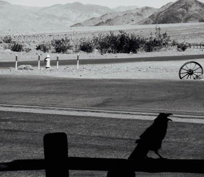 parched crow 1