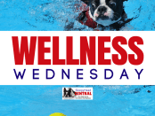 sleep apnea screening wellness wednesday #wellnesswednesday