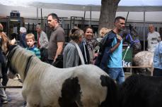 Paardenmarkt V'schoten (101)
