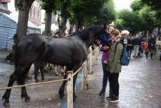 Paardenmarkt V'schoten (22)