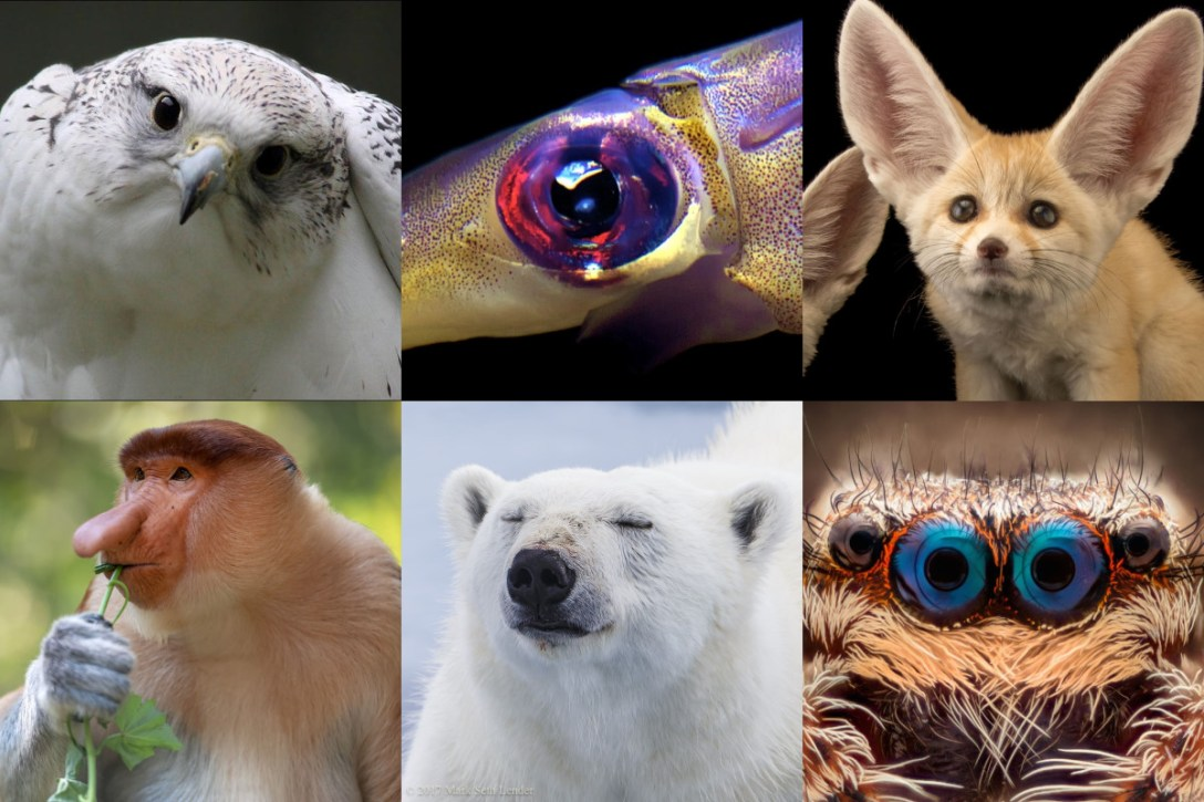 Gallery of impressive animal eyes, ears, and noses