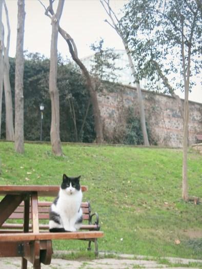 Cat in Yıldız Parkı