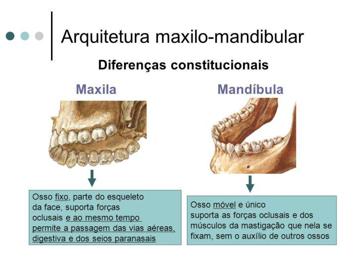 Resultado de imagem para MAXILAR E MANDIBULA