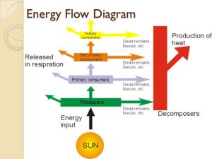 231 Flows of Energy and Matter  ppt video online download