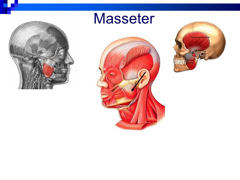 Major Muscles Neck