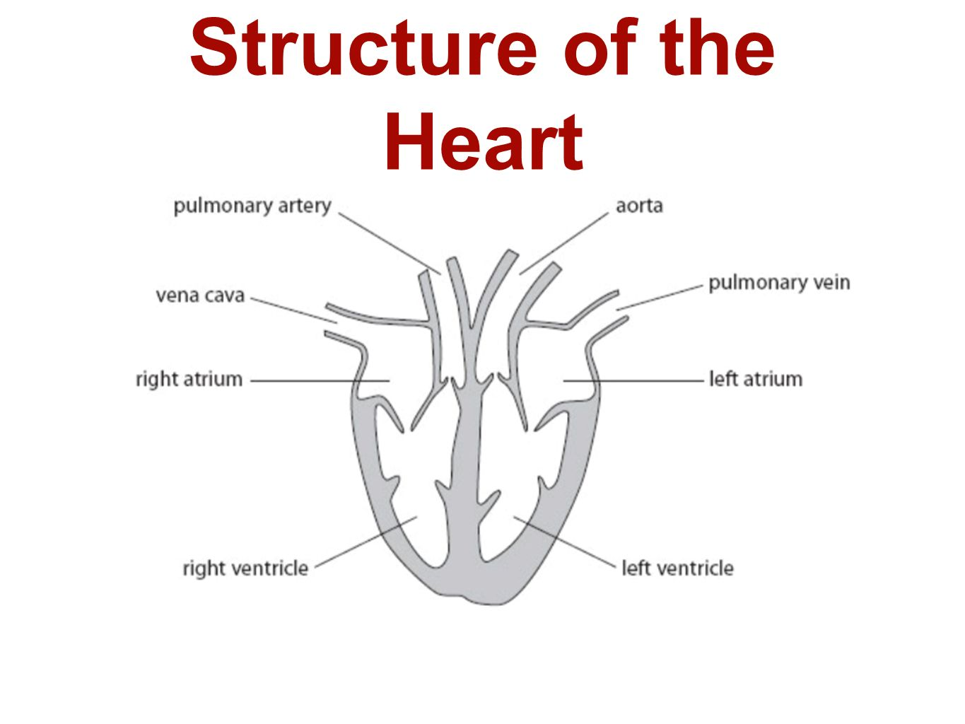 Heart Physiology Diagram