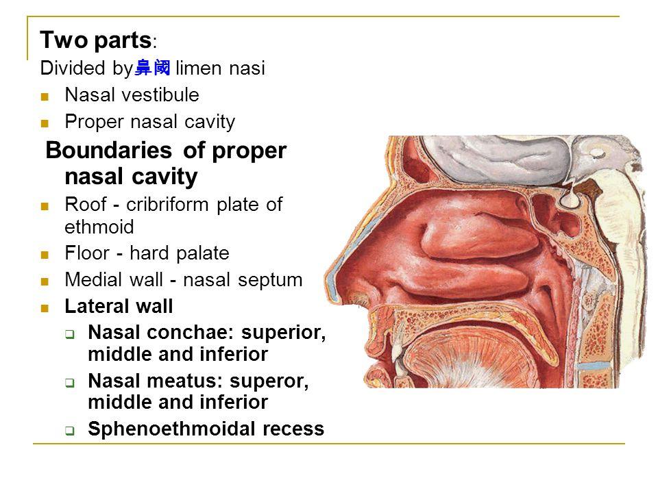Nasal Cavity Function Respiration