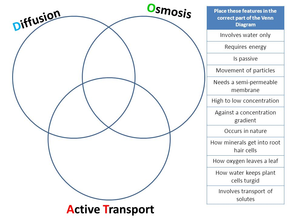 Facilitated Diffusion And Active Transport Venn Diagram