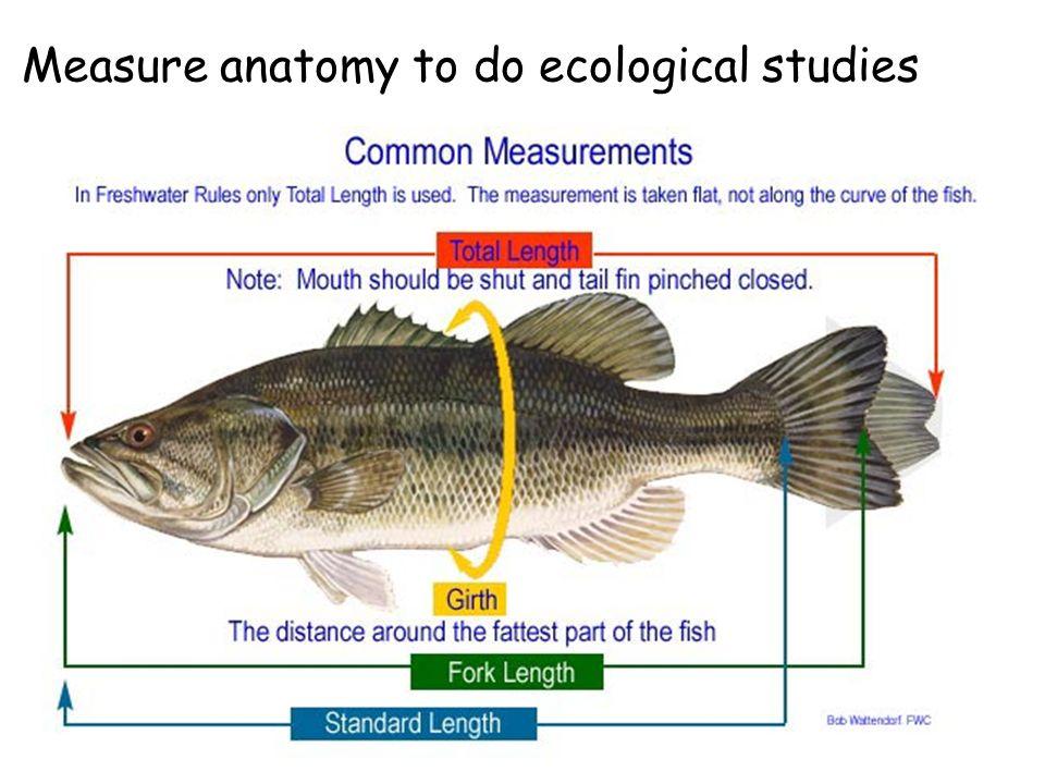 Fish External Anatomy Of Maxilla