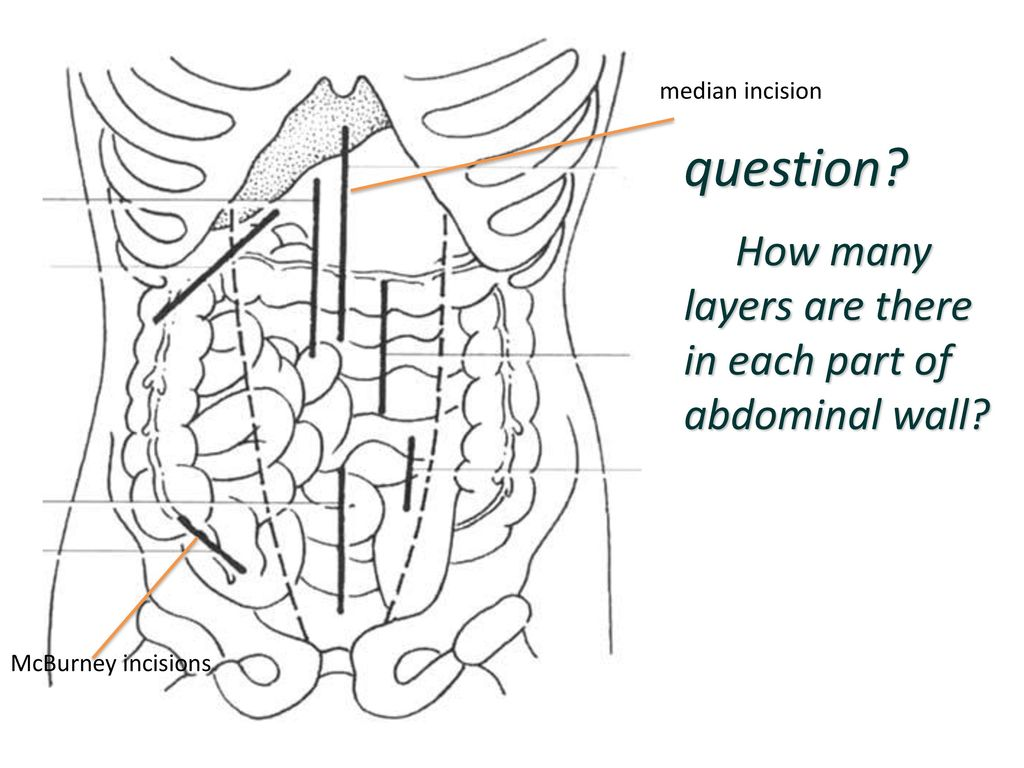 Abdominal Wall Midline Incision Layers The Abdomen Lee