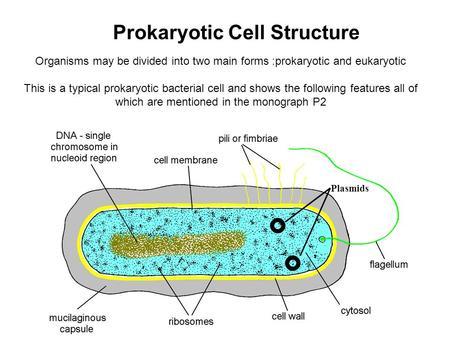 Eukaryotic Cells Diagram Of A Colored Pencil Eukaryotic Animal Cell