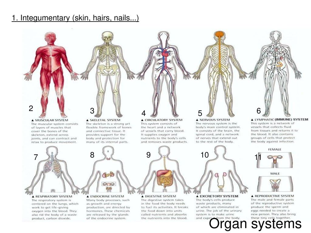 Human Anatomy Amp Physiology Introduction