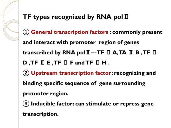 Genetic information transfer (RNA transcription-转录) - ppt ...