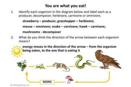 What Animals Are Carnivores Herbivores And Omnivores 4k Pictures