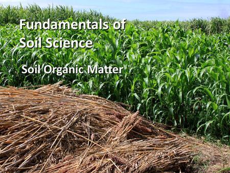 Soil Organic Matter Martha Rosemeyer January 20, 2004 ...
