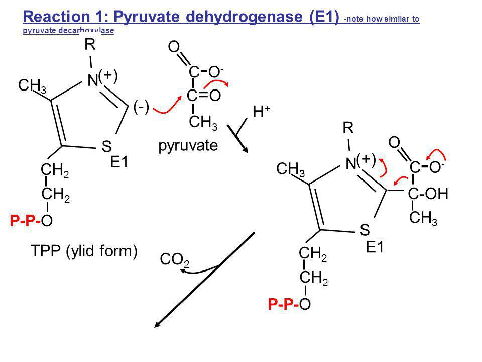 Lecture 25 Quiz Monday Pentose Phosphate Pathway