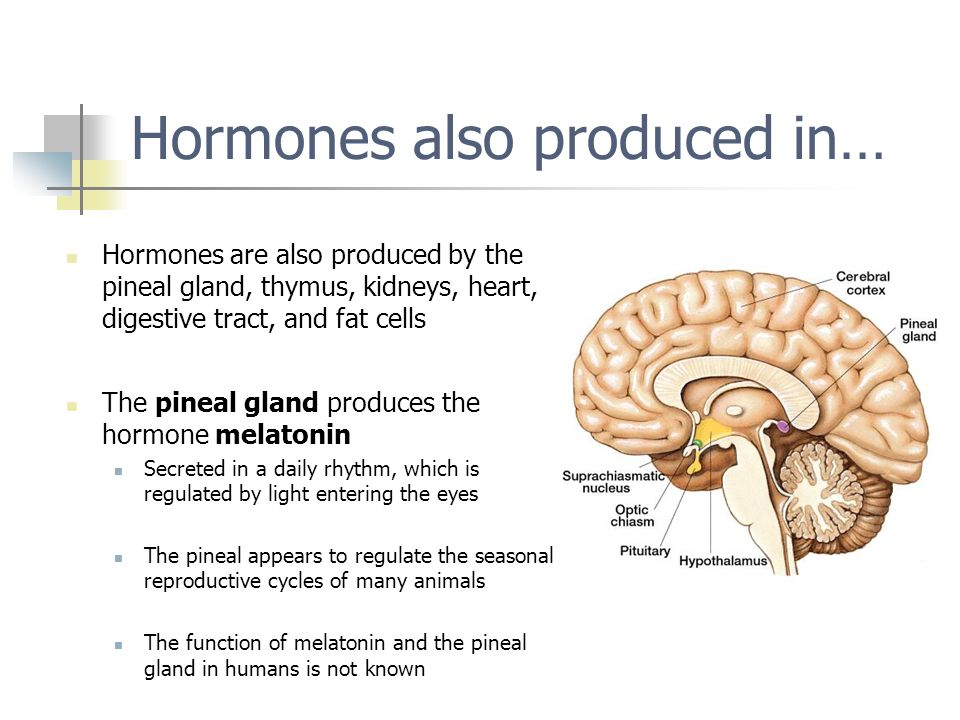 Thymus Gland Hormones Secreted