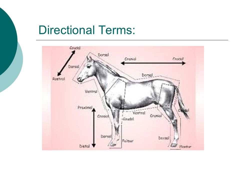 Anatomy Directional Terms Game