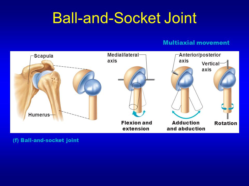 Www Picture Of Saddle Joints