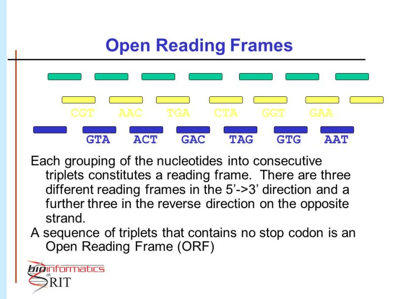 Open Reading Frame And Gene | Frameswall.co