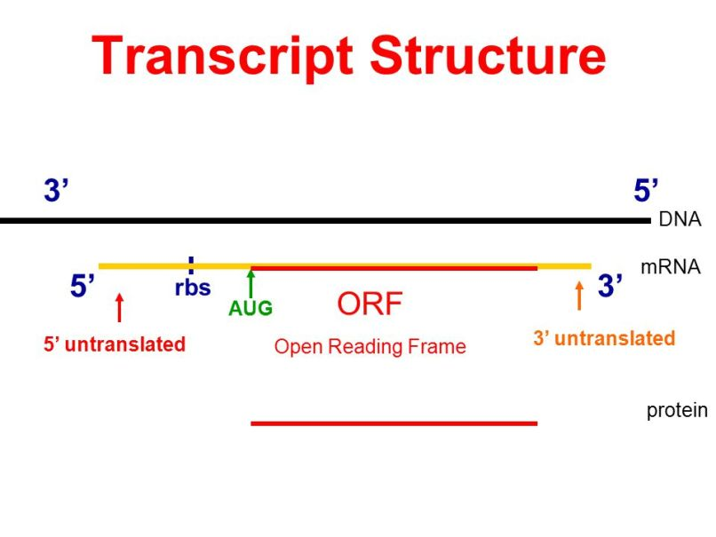 open reading frame dna | Frameswalls.org