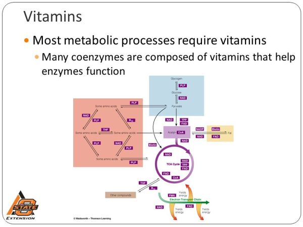Vitamins Presented by Janice Hermann, PhD, RD/LD - ppt ...