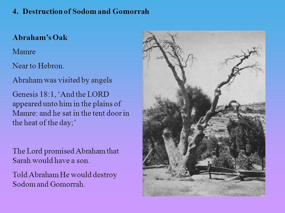 Image result for Abraham's oak at mamre images