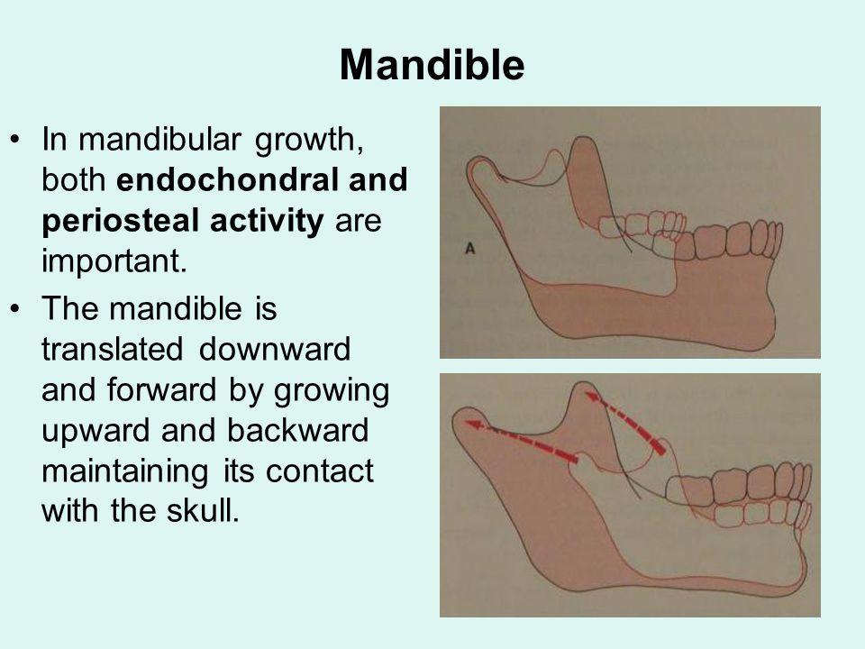 Growth Mandible Bony
