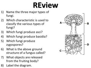 Kingdom Fungi  ppt video online download