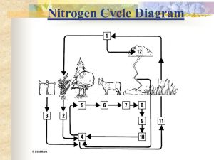 23 Nitrogen Cycle  ppt video online download