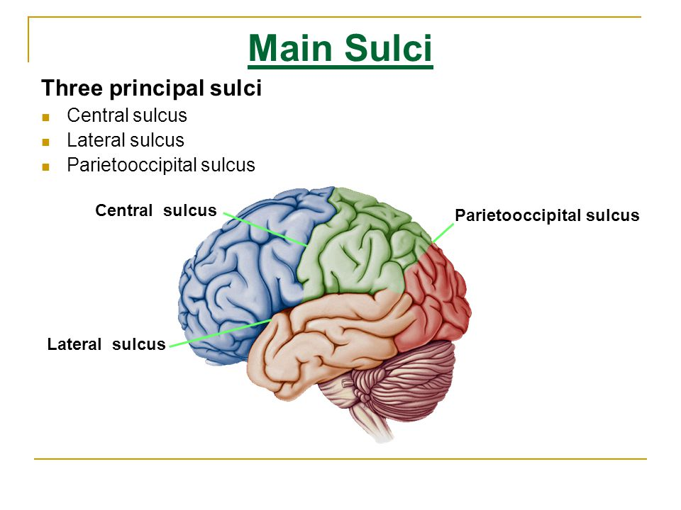 Middle Superior And Inferior Frontal Gyri