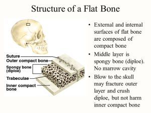 Chapter 7 Bone Tissue Tissues and ans of the skeletal
