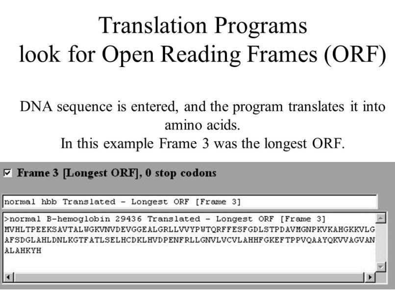 orf reading frame | Frameswalls.org