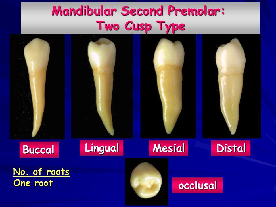 Mandibular First Premolar Root Canal