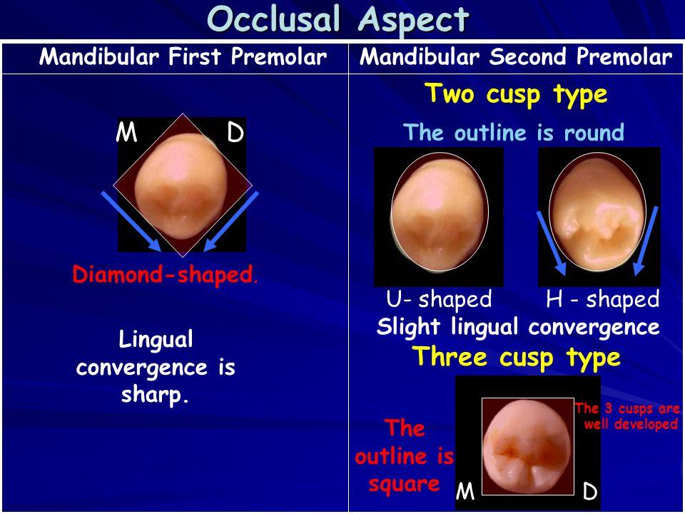 Mandibular Second Premolar Anatomy