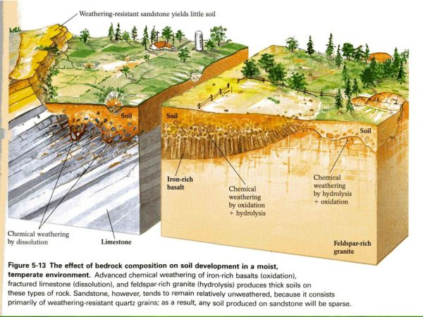 Agriscience and Technology I Introduction to Soil Science ...