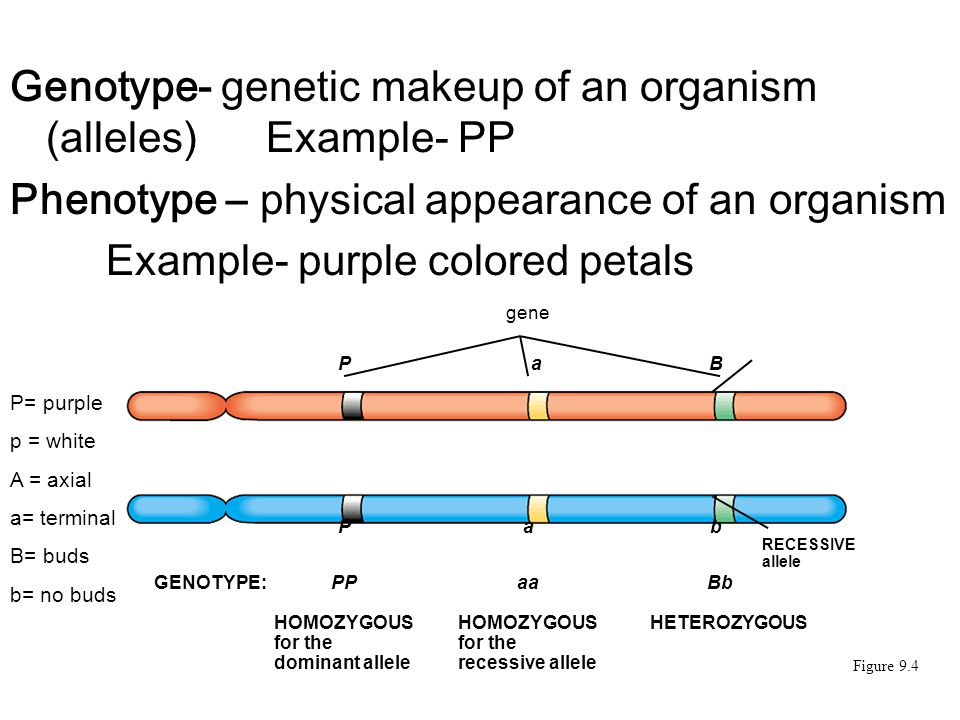 Genetic Makeup Of An Organism Delectable What Is The Genetic Makeup Of An Organism Called Makeupviewco