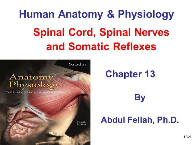 Saladin Human Anatomy Images - human body anatomy