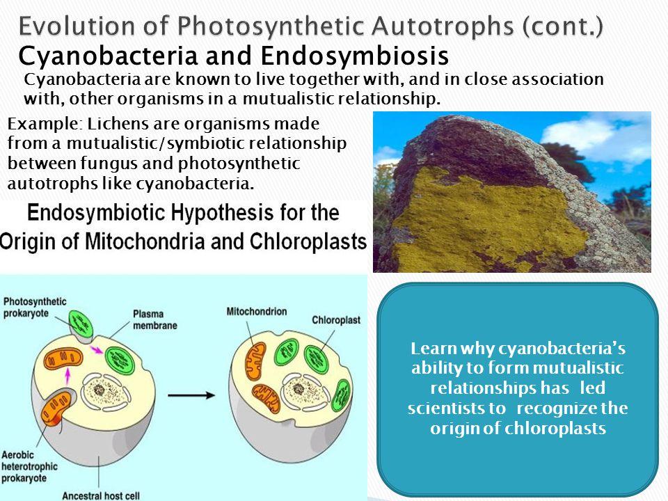 Autotroph And Heterotroph Venn Diagram - Trusted Wiring Diagrams •