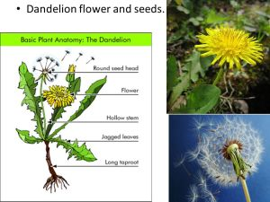 The Life Cycle of a Plant  ppt download