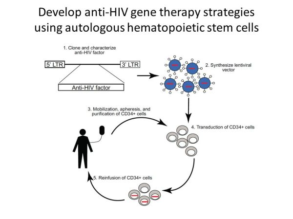 Hematopoietic stem cell based gene therapy for HIV ...