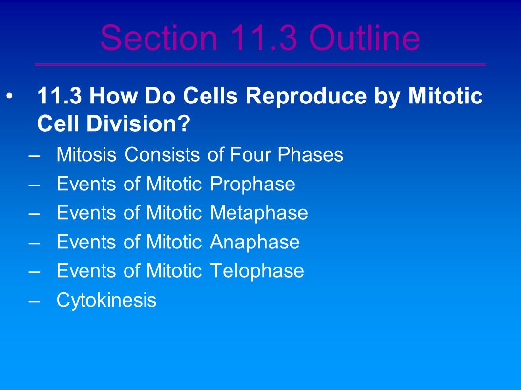 Chapter 11 The Continuity Of Life Cellular Reproduction
