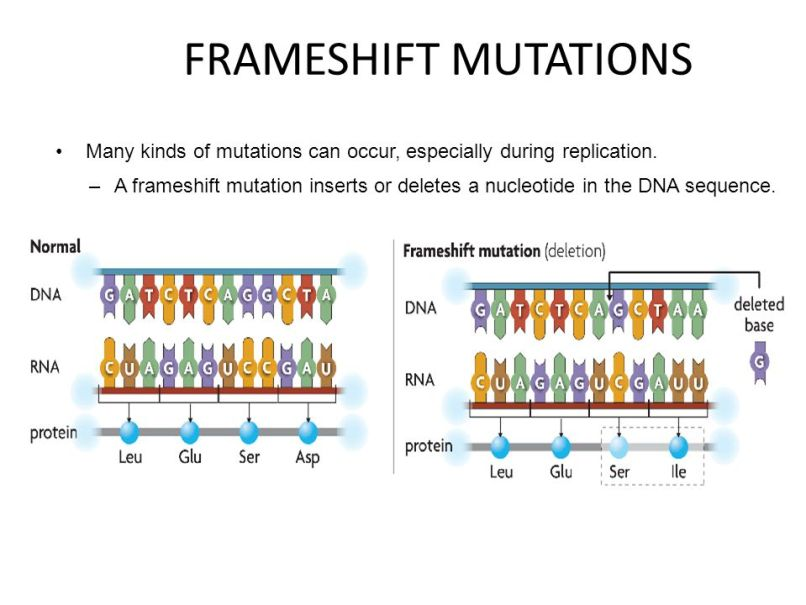 Dna Frameshift Mutation Definition | Frameswalls.org