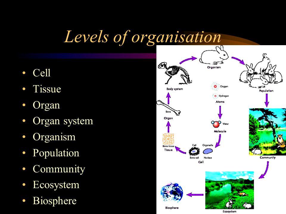 8 characteristics of life cells