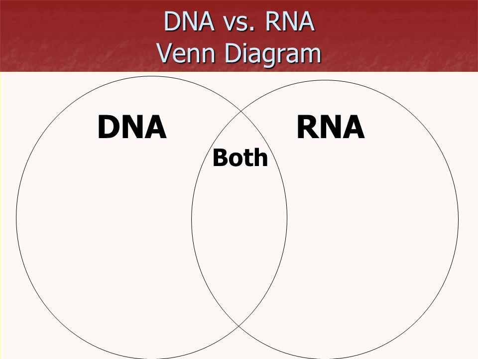 Double Venn Diagram Worksheet