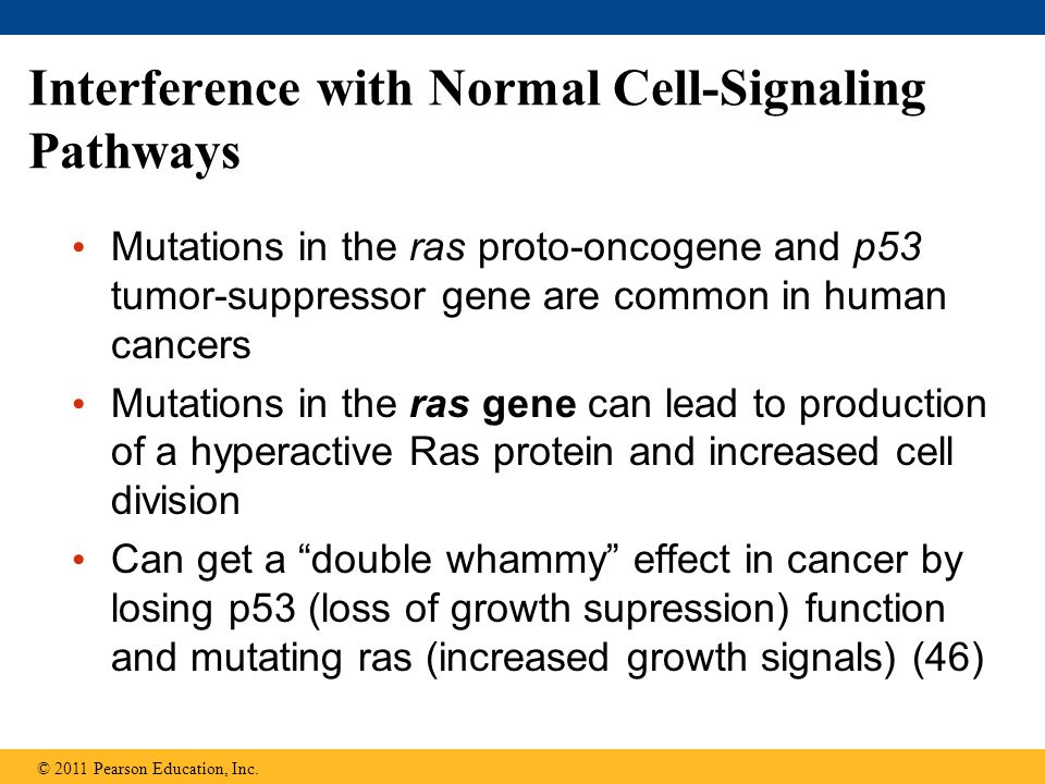 Regulation of Gene Expression - ppt download