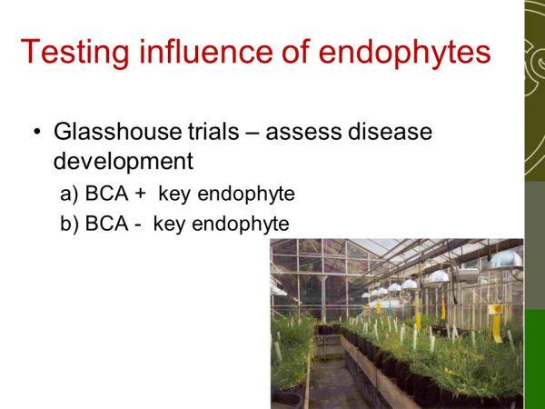 Endophytes: biocontrol killers? - ppt video online download