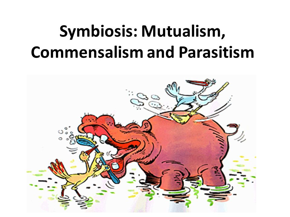 Image result for Parasitism or Mutualism (Symbiosis)