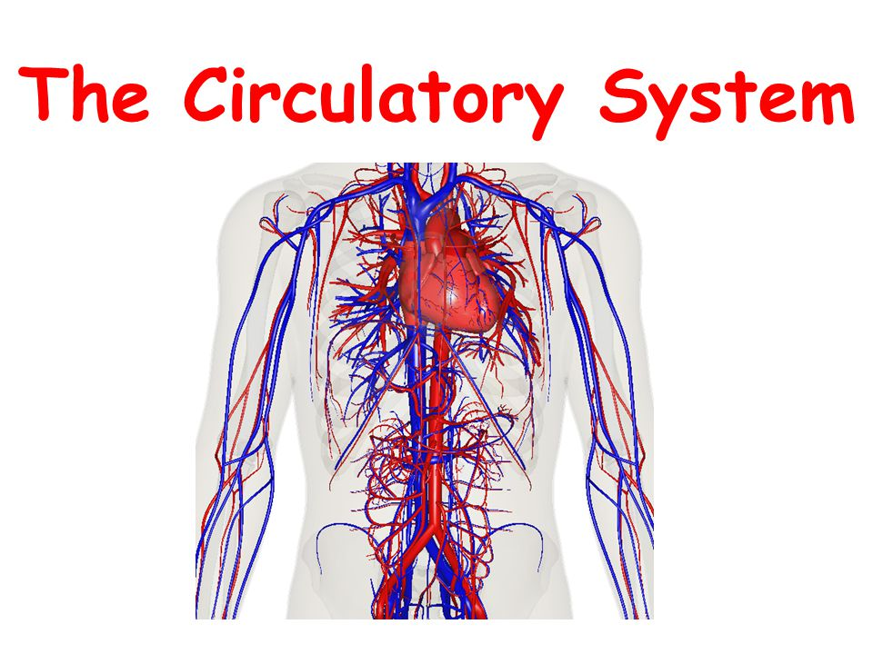 Your Body Where Are Your Lungs Located